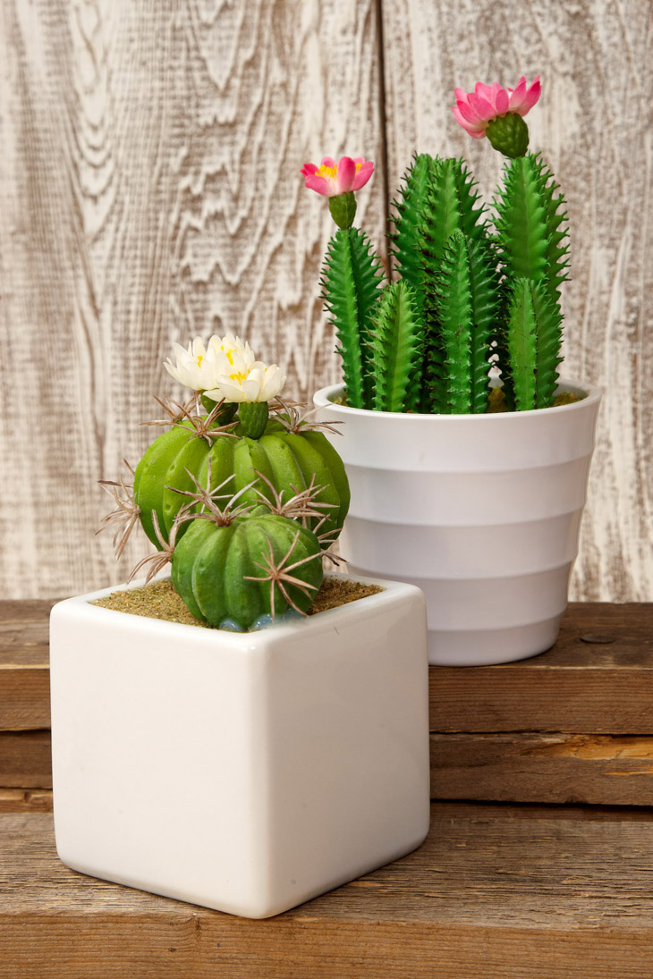 Image result for photos of kaktusi za doma